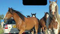 Escaped horses block major A-road