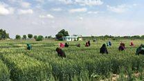 افغانستان: کرنیز سکتور کې د ښځو ونډه