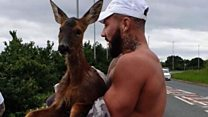Man saves drowning deer