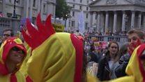 Chickens against Trump