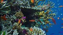 โลกอัศจรรย์ใต้สมุทร