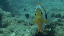 Океани су дом дивним и чудним створењима, али можда не задуго