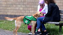 How Lexi the dog is fighting isolation