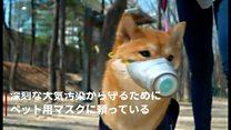 「犬用マスク」の効果は? 付け心地は? PM2.5汚染度が第2位の韓国