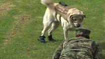 Frida the rescue dog retires