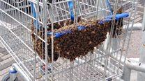 Supermarket trolley is 'bees knees'
