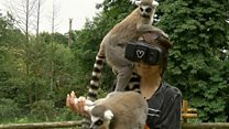 Goggles help blind girl see animals again