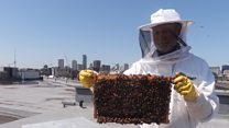 'I spend my lunch break with 150k bees'