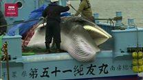 Jepang kembali izinkan perburuan paus komersial