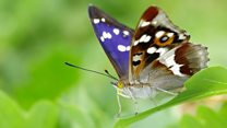 Butterfly returns after nearly half a century