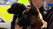 Meet the new police puppy recruits