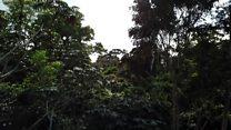 Amazônia perde 'um campo de futebol' de floresta por minuto