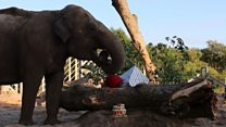 What goes into an elephant birthday cake?