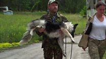 チェルノブイリの犬たち 立入禁止区域に置き去りに