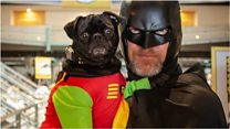 Superdog and Batman