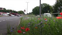 Wildflower verges give splash of colour to roads
