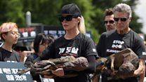 Kim Basinger joins dog meat protests
