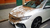 Bees swarm on city centre parked cars