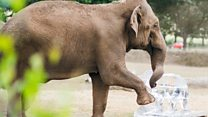 Elephants stay cool with ice sculpture likeness