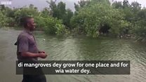 Mangrove fit clean di polluted environment for Niger Delta - Nigerian expert