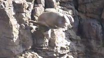 Seals crash onto rocks fleeing tombstoners