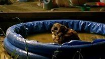 Owl turns paddling pool into hoot tub