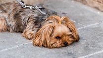 Heatwave pavement test for dog owners