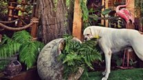 Man builds £35,000 tropical garden for his dog