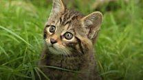 ही मांजरींची पिल्लं खास आहेत