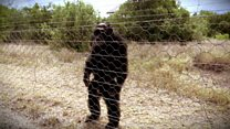 İki ayak üstünde yürüyen şempanzeler