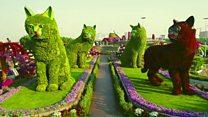 Exploring Dubai's Miracle Garden