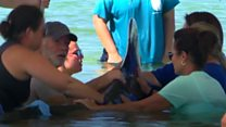 Strangers unite to save five beached whales