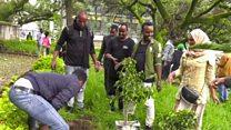 အီသီယိုးပီးယားမှာ တနေ့တည်း အပင်သန်းရာချီ စိုက်ခဲ့