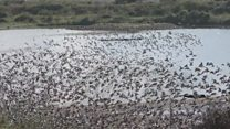 'Incredible scenes' as huge flocks of birds arrive