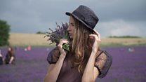 UK lavender blooms on Instagram