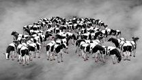 """Климатске промене: """"Мање меса за спас планете"""""""