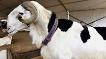 L'insécurité contribue à la hausse du prix du mouton à Ouagadougou