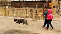 تعطیلی مدارس طبیعت در ایران