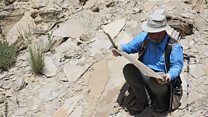 "Dinosaurs: Digging up the ""Jurassic Mile"""