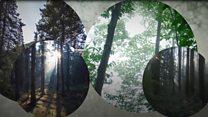 Врятувати ліси: чому недостатньо садити нові дерева?