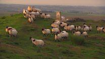 Long watch: Life on a Northumberland sheep farm