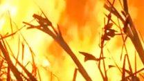 Incendios en el Amazonas: las respuestas de las ONGs a las acusaciones de Bolsonaro