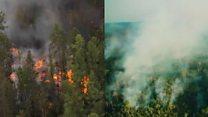 Амазония и Сибирь: как начались пожары и как на них реагировали