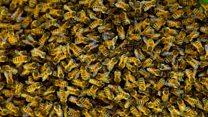 வீட்டில் கூடு கட்டிய ஐம்பதாயிரம் தேனீக்கள் - அதிர்ந்த பெண்மணி
