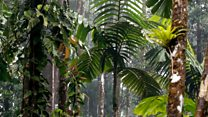 Why is the Amazon rainforest so important?