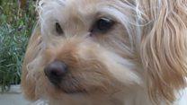 Abandoned dog wins beauty contest