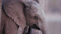 या निकालानं हत्तींचा विजय झाला आहे...