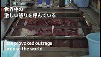 日本で商業捕鯨が再開 解体作業を見て何を思う