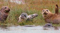 Seal surveys on the River Thames