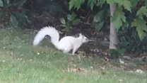 'Rare' white squirrel spotted in garden